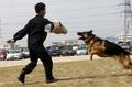 警犬训练过程