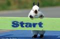 趣味兔子障碍赛