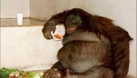 史上10只最胖动物:最胖刺猬犹如圆球(图)