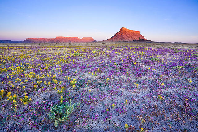 摄影:犹他州的荒原花海 - 海阔山遥 - .