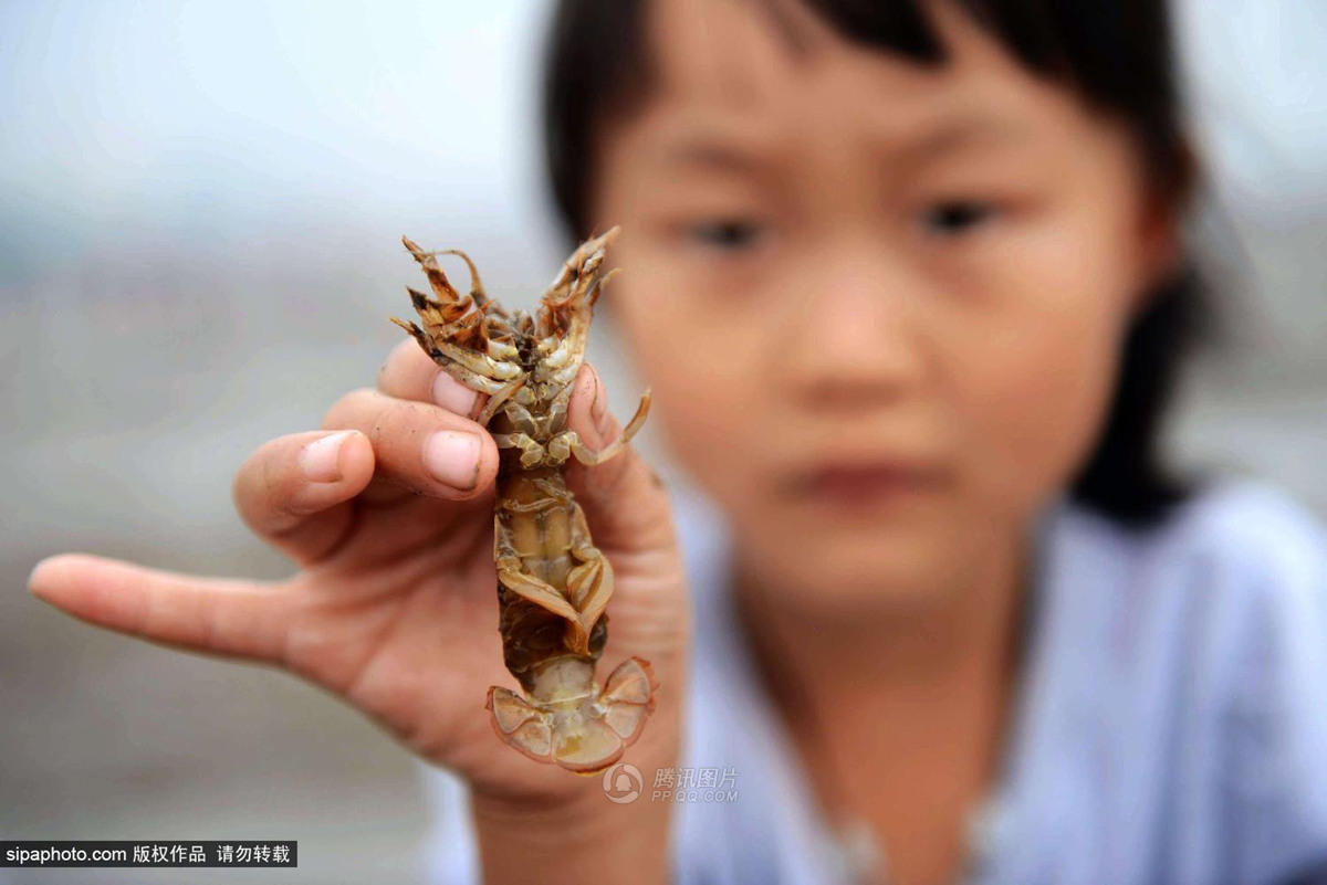 你敢吃吗?青岛海滩成污泥滩 民众狂钓蝼蛄虾