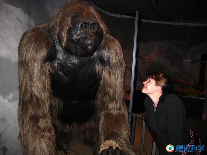 盘点十大可怕的远古巨兽:恐鳄吃恐龙,泰坦巨蟒,巨猿照片