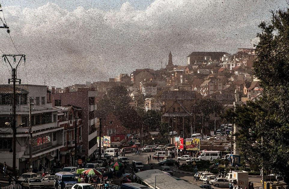 马达加斯加数十亿蝗虫过境遮天蔽日 农业告急 - CHINA-CLO2 - 中国 消毒水网