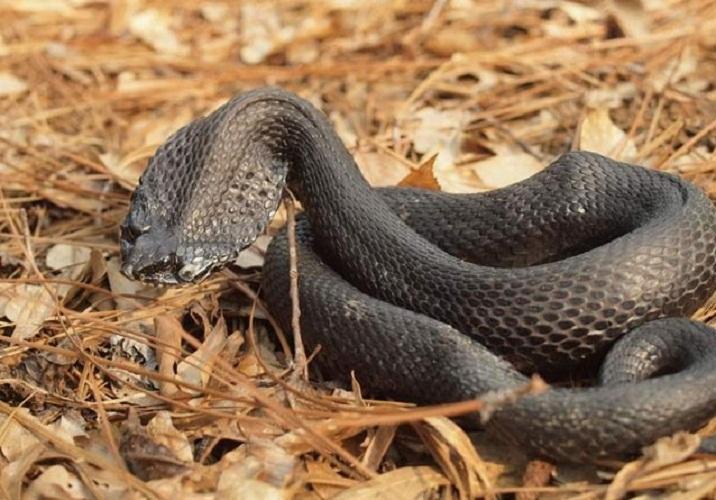 自然界中最古怪的九大蛇类