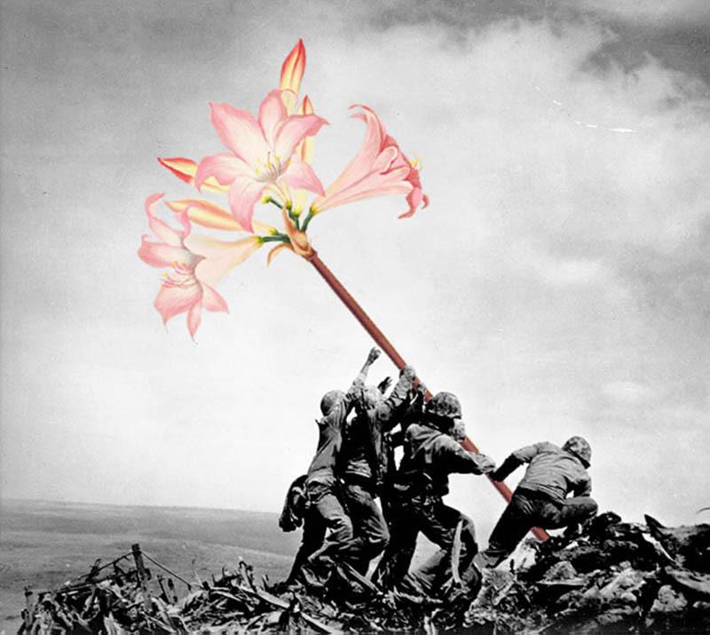 如果战争是朵花