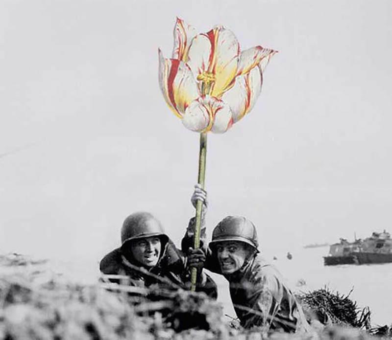 如果战争是朵花 知乎精选 第2张