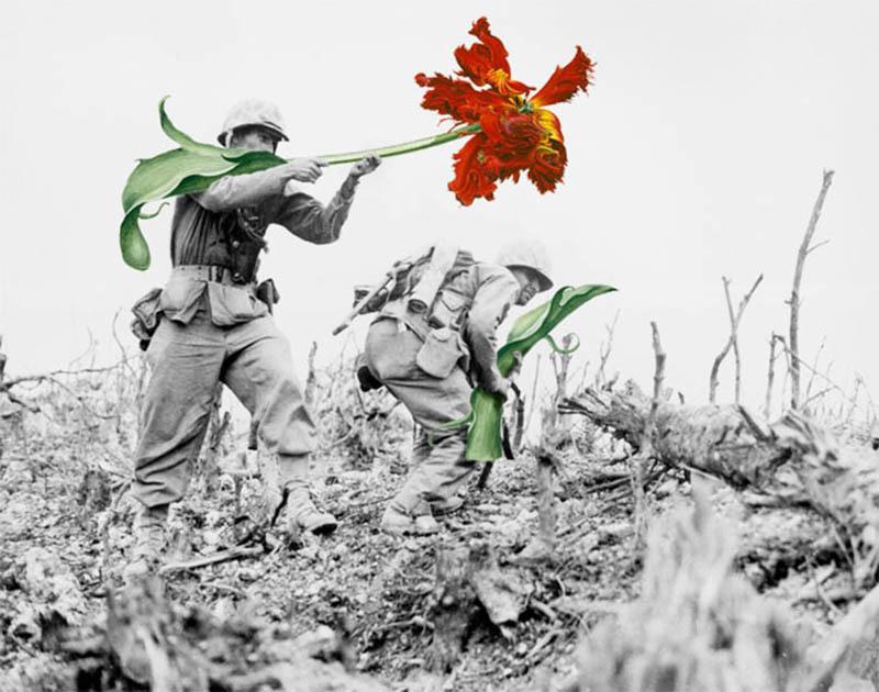 如果战争是朵花 知乎精选 第3张