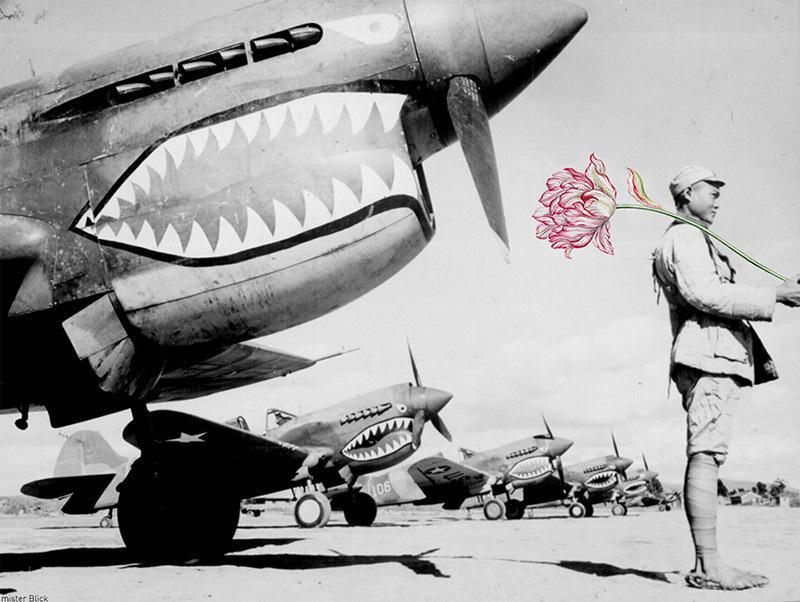 如果战争是朵花 知乎精选 第5张