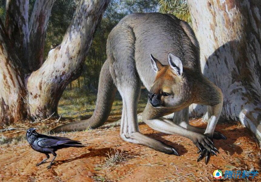 动物巨型祖先:双门齿兽|鸭嘴巨兽|史前袋鼠|远古企鹅