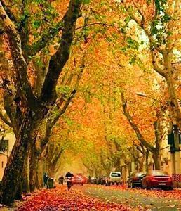 落叶不扫,更添风情。