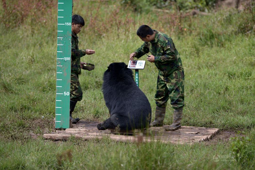 高清:普洱启动野生动物本底调查