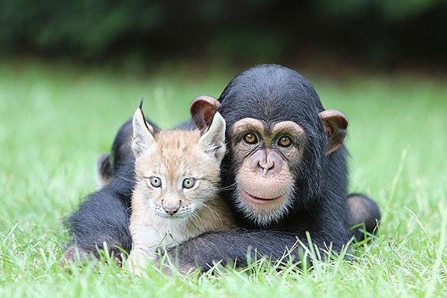 奇葩的动物友谊组合