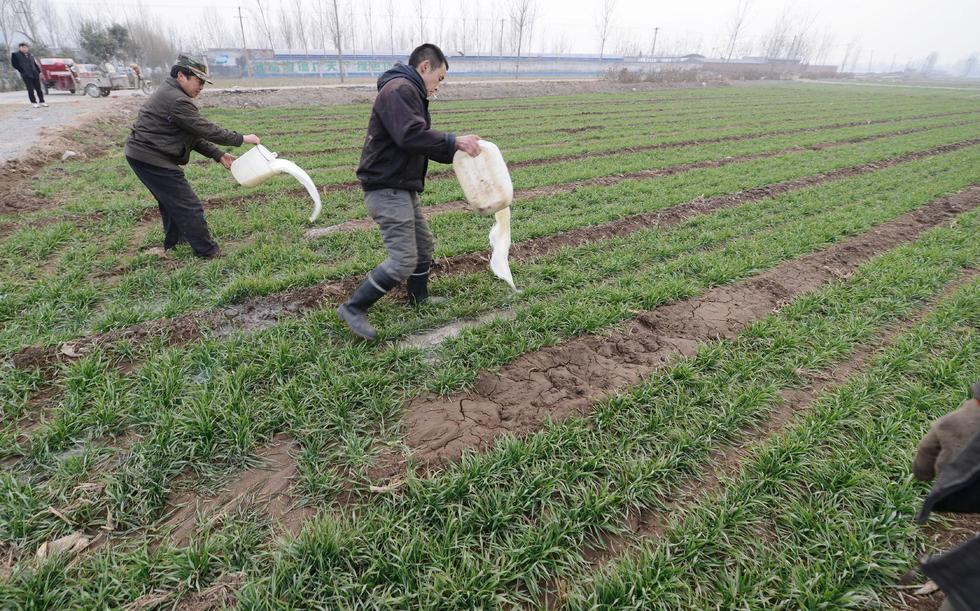 河南新乡鲜牛奶滞销 奶农用鲜牛奶浇地 - 海阔山遥 - .