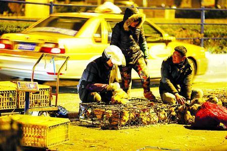 在城乡结合部,一些摊贩选择凌晨卖活禽逃避监管