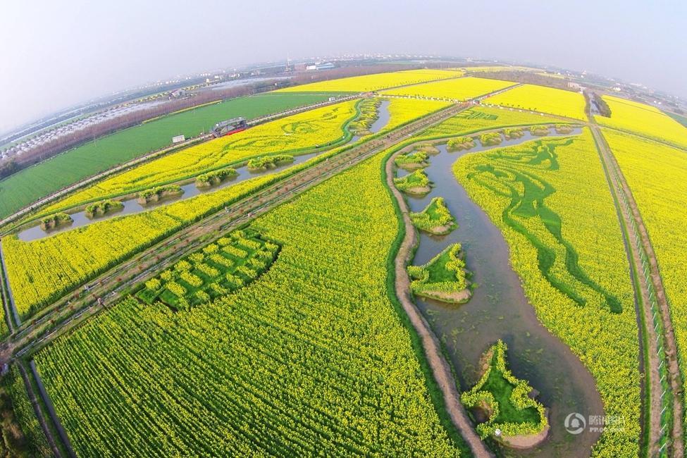 上海油菜花田现巨幅大地油画《丝绸之路》2015.4.2 - fpdlgswmx - fpdlgswmx的博客