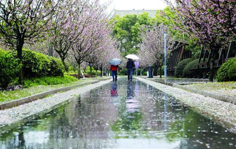 人民公园数千平方米的海棠园里,千余株海棠接力樱花,延续着春天的美丽。