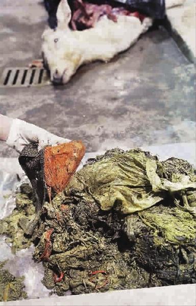 黄瓜幼儿塑料袋手工制作图片