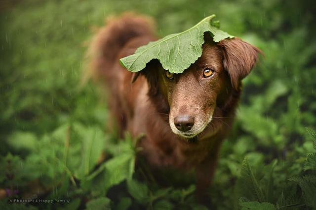 雨中小动物和它们的天然小伞