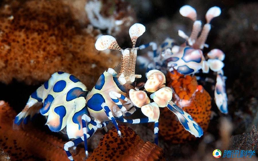 组图:摄影师镜头下的海洋生物原来是这么美