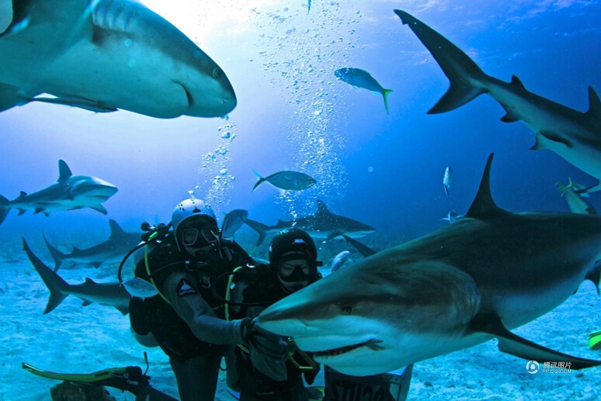 勇敢者的游戏 岛国巴哈马的 喂鲨潜