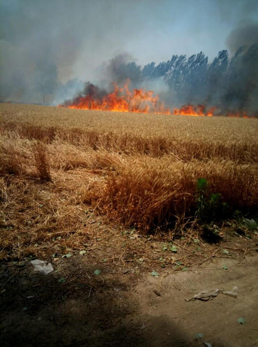 山东河南昨日大面积麦田起火2015.6.10 - fpdlgswmx - fpdlgswmx的博客