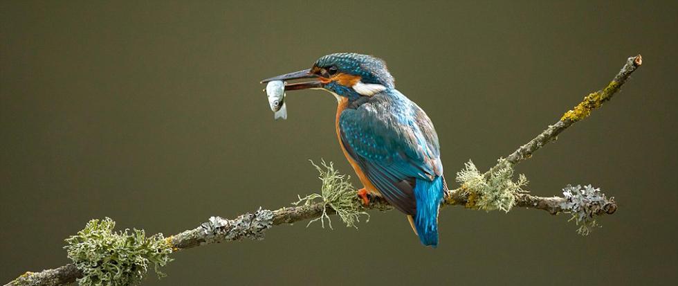 国际野生动物摄影大奖出炉 记录多彩大自然