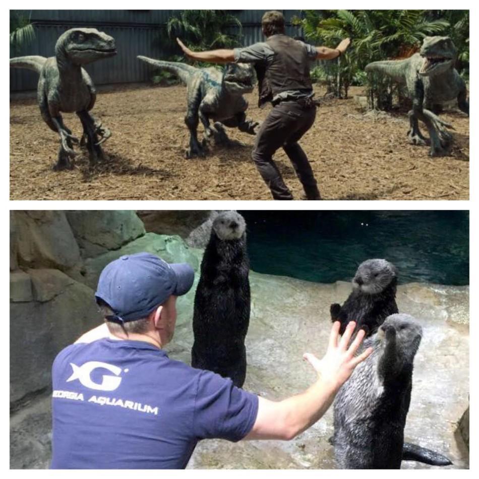 """全球动物饲养员模仿《侏罗纪世界》"""""""