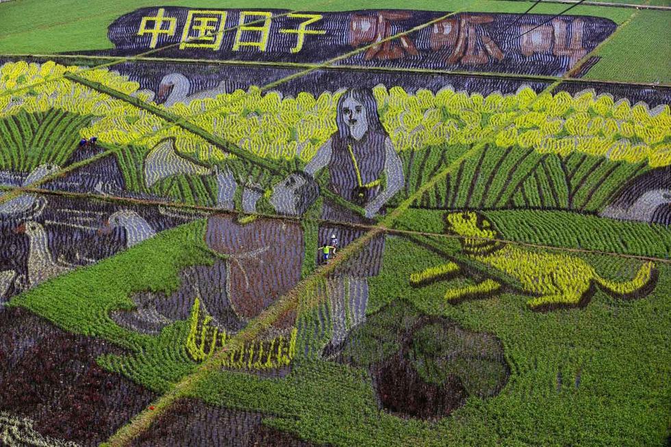 """巨幅""""3D稻田画""""亮相沈阳2015.6.23 - fpdlgswmx - fpdlgswmx的博客"""