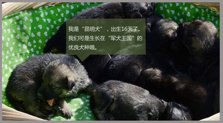 视频:《半妖倾城》曝概念片花 暗黑童话