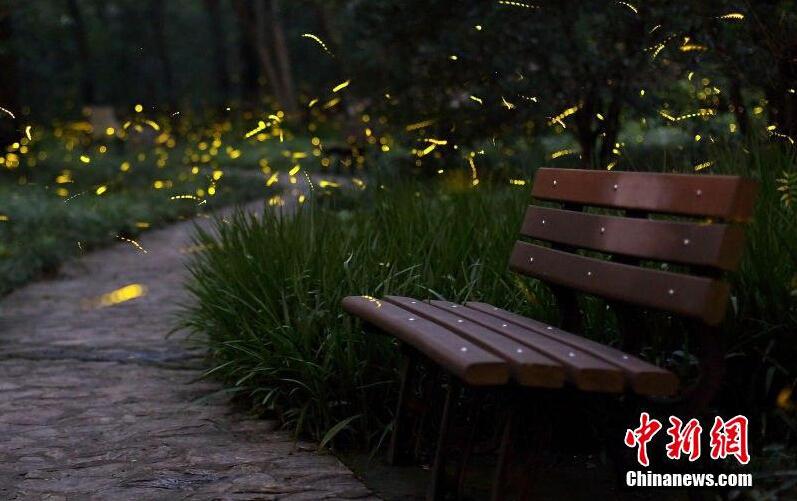 南京仲夏夜成群萤火虫轻舞飞扬2015.7.16 - fpdlgswmx - fpdlgswmx的博客