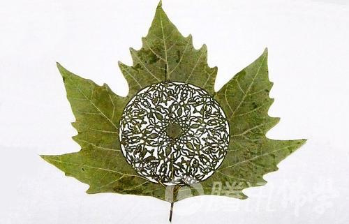 叶一菩提 精美树叶雕刻