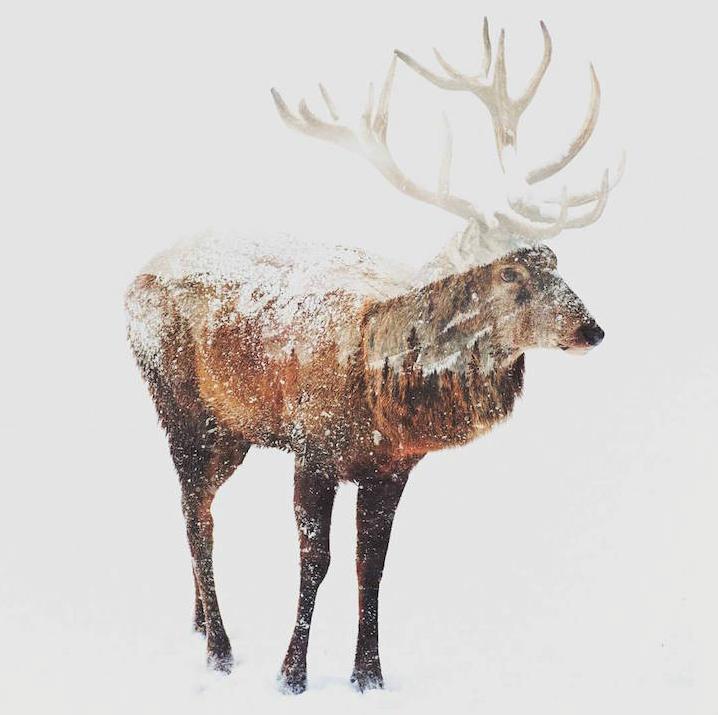 冰雪奇缘:北极动物大冒险
