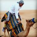 组图:霍华德现身迪拜 着长袍骑骆驼不亦乐乎