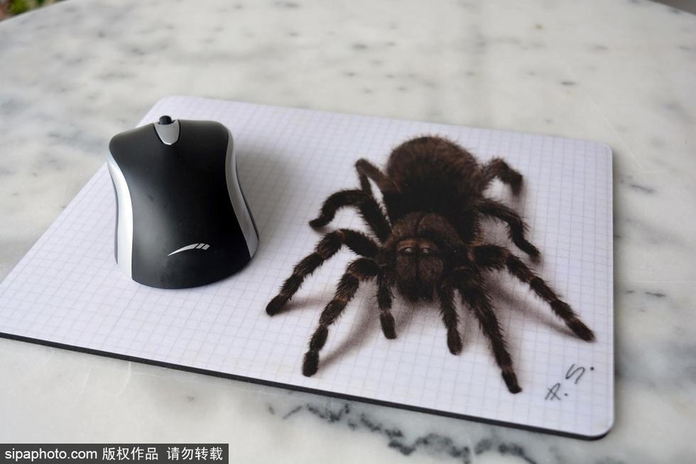 画了一只超级逼真的3d蜘蛛