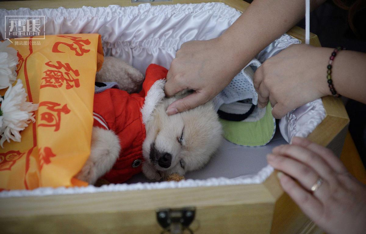【鹅眼】一只狗的奢华葬礼 - 海阔山遥 - .