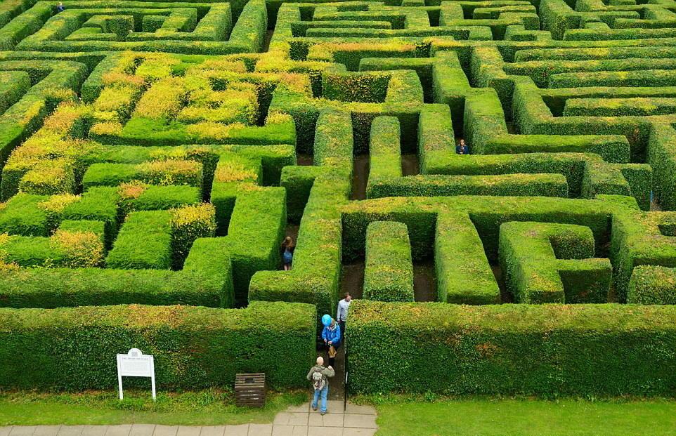 不可思议的植物迷宫