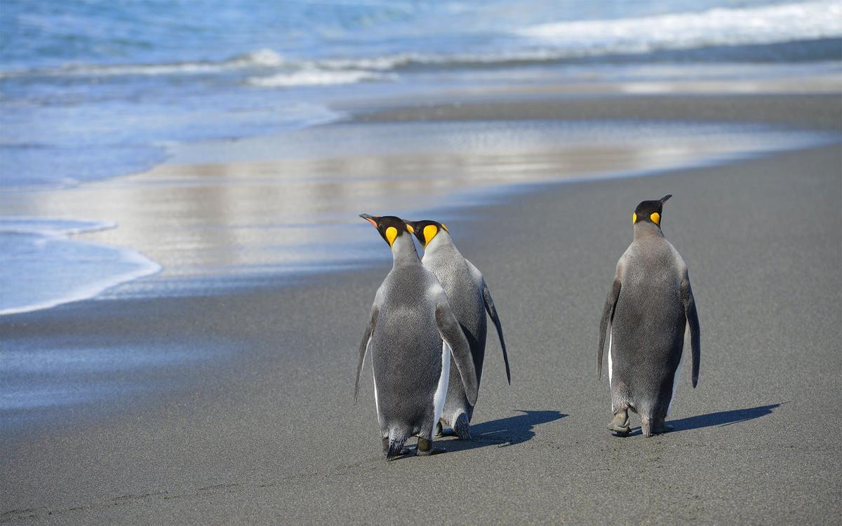 壁纸 动物 企鹅 1200_750