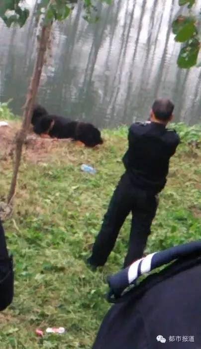 【转载】女子放藏獒咬伤4村民 称狗命比人命重要  (组图) - 安然 - 轩鼎紫气