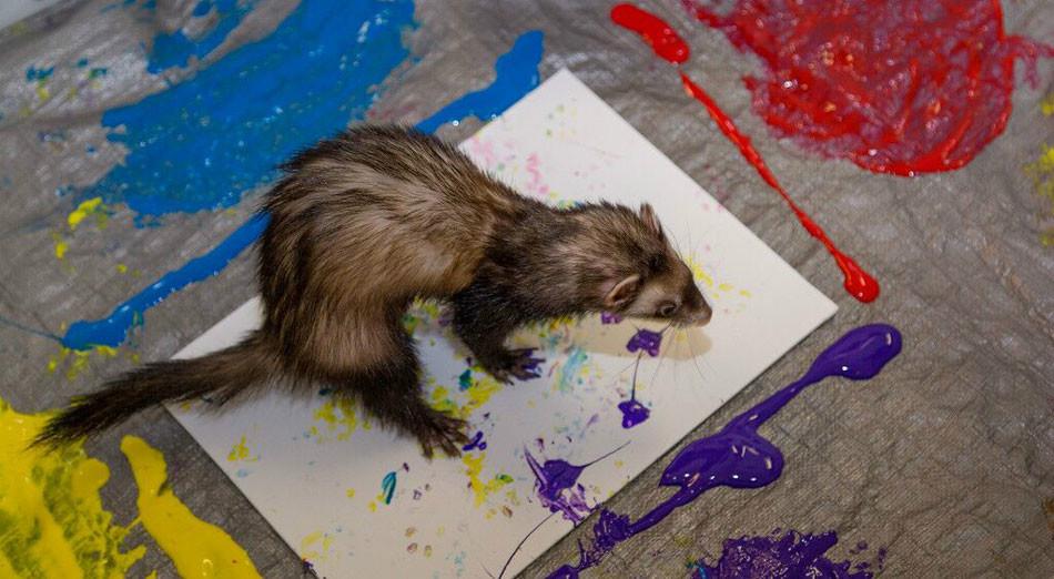 美动物园:当动物们成为画家