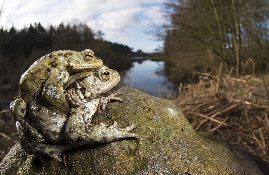 英国野生动物摄影大赛获奖作品_有颗水晶心_新浪博客