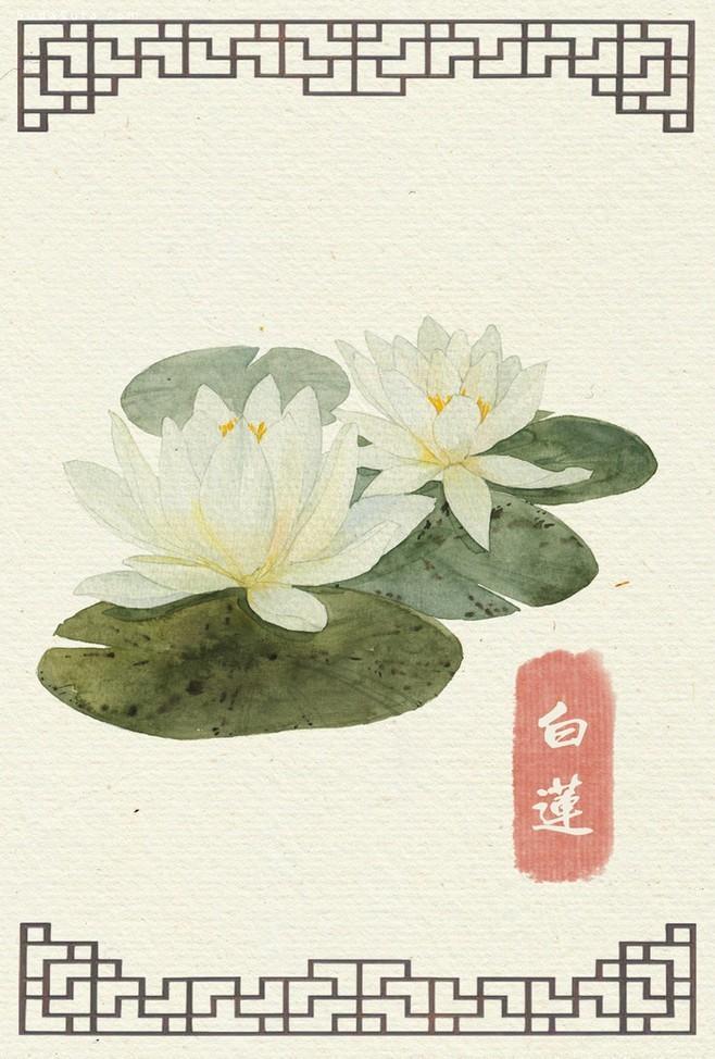 【当代艺术】白莲花-唯美手绘花
