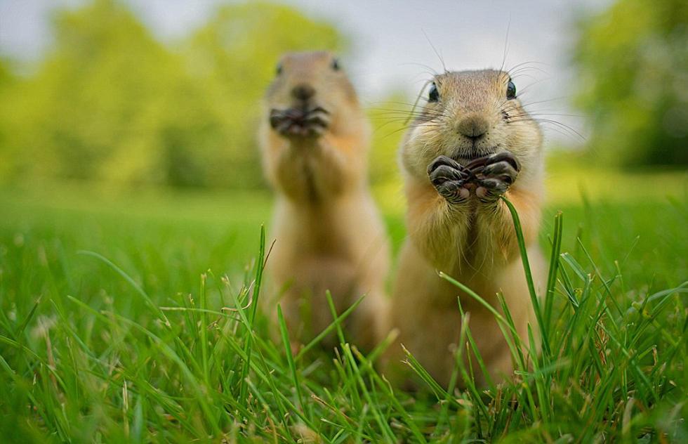 萌翻你 奇趣野生动物摄影大奖赛图片赏