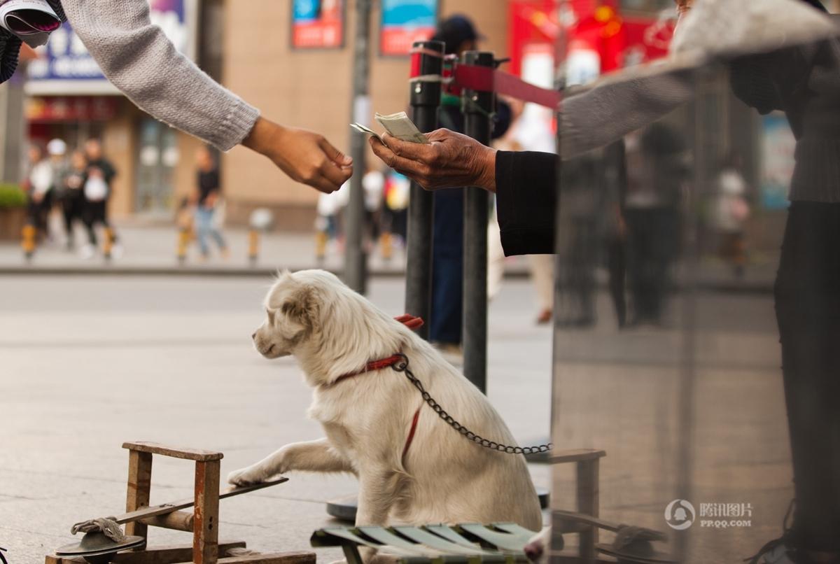 【耄耋收藏】长春八旬老人靠狗敲锣乞讨 日赚数百元(图) - 耄耋顽童 - 耄耋顽童博客 欢迎光临指导