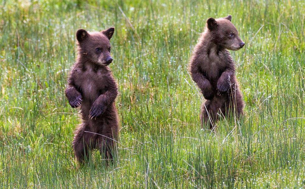 萌化了!两只小熊大树下玩躲猫猫 - 海阔山遥 - .