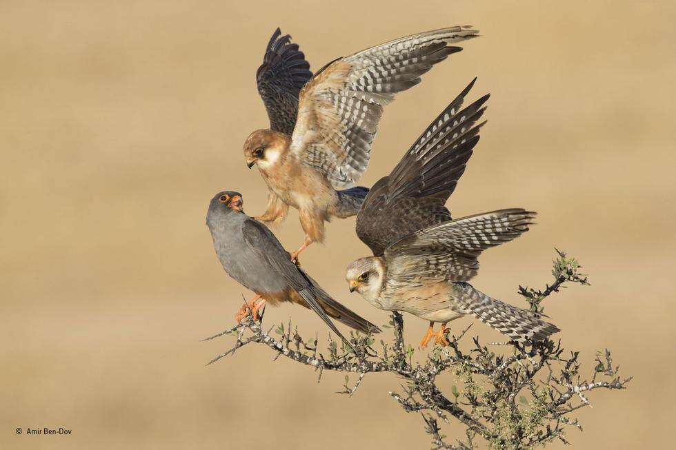 野生动物摄影大赛获奖作品