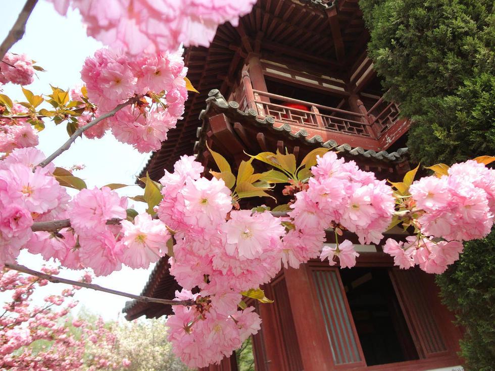 ...风景幽雅的乐游原上极盛于唐代中期.当时有不少外国僧人在...