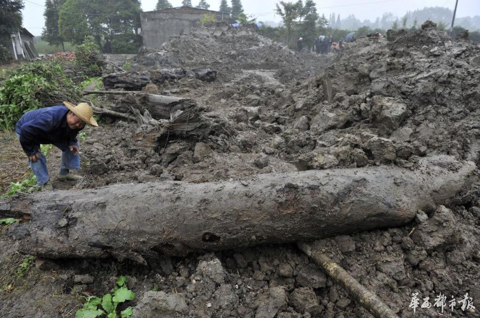 四川崇州田间挖到疑似20米巨型乌木2015.11.12 - fpdlgswmx - fpdlgswmx的博客