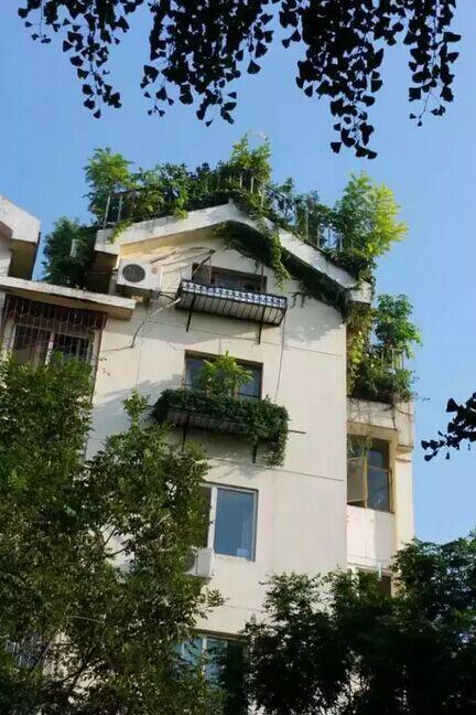老人楼顶自建5层绝美 空中花园 被投诉调查