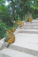 """转发:西昌泸山""""猴患""""追踪:10天抓100只猕猴(图) - 东篱散人 - 东篱散人1818的博客"""