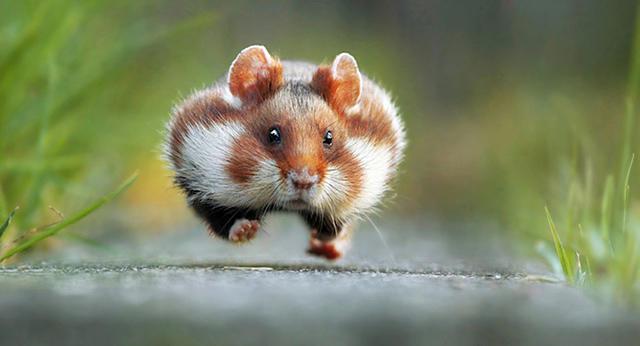 最搞笑动物摄影大赛获奖作品